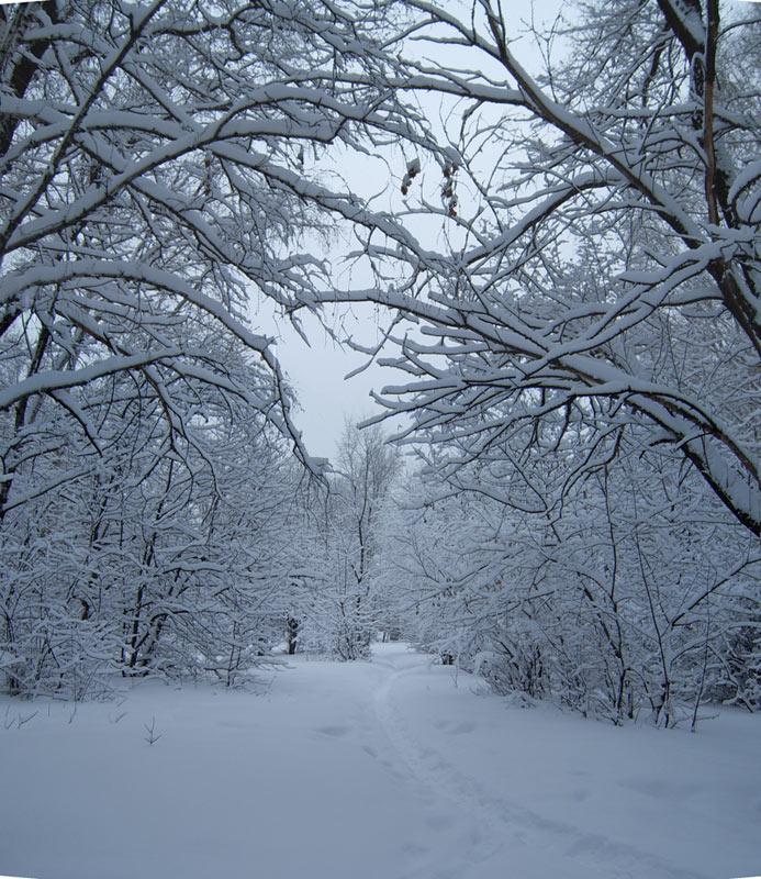 Погода в москве на декабр 2012