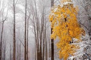 Чем хорош ноябрь