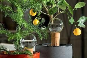 Домашние растения без забот