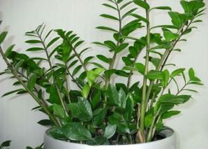 Домашние растения, которые не требуют больших забот